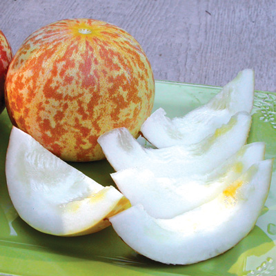 Tigger Melon (ไทเกอร์เมล่อน)