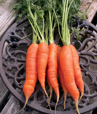 Baltimore Carrots