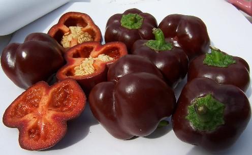 Brown Sweet Pepper