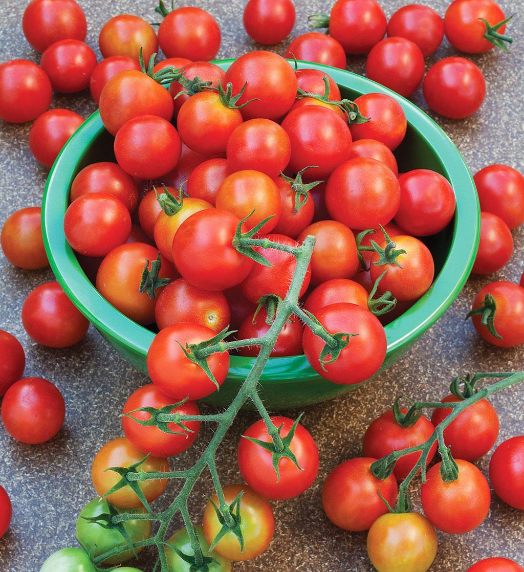 Sweet Hundred tomato