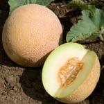Ananas melon (เมล่อน อนานาส)