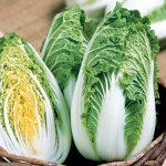 Soloist Chinese Cabbage (ผักกาดเขียวปลีจีน)