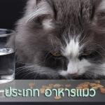 4 ประเภทอาหารแมว