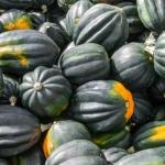 Acorn Squash pumpkin