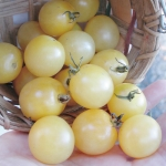 Cherry White tomato