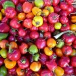 Cherry Bomb Pepper (พริกเชอรี่)